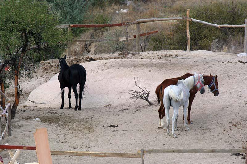 Загон для лошадей в долине.