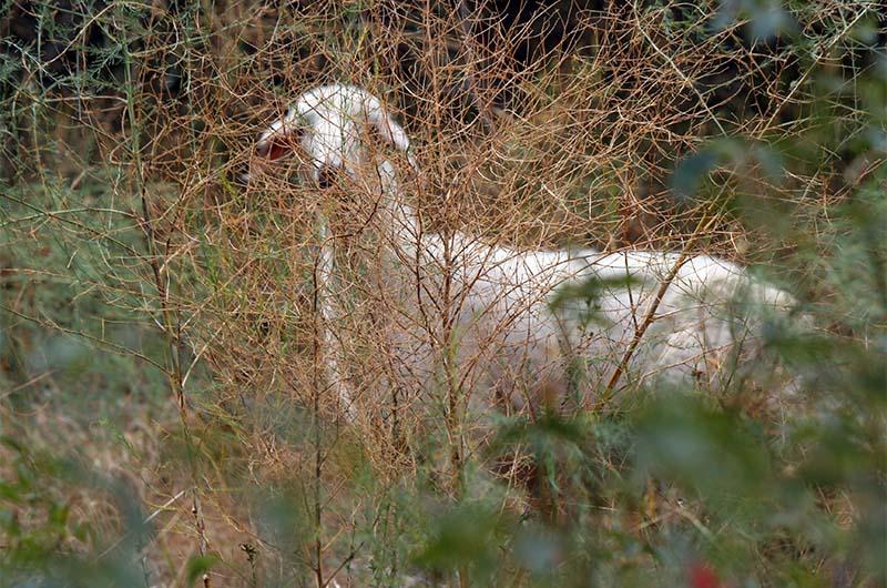 В долине встречаются пасущиеся овцы.