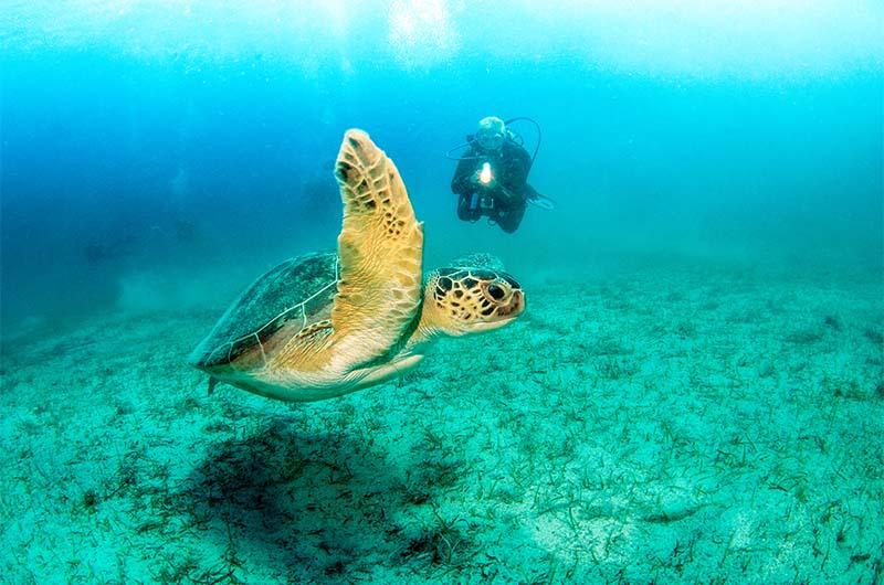 Фотографирование морской черепахи во время дайвинга.