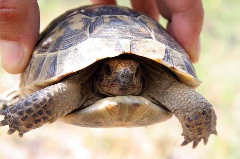 В долине можно встретить черепах.