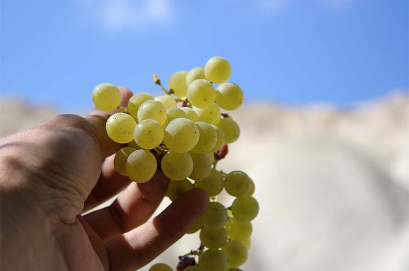 Из такого винограда делают пекмез.
