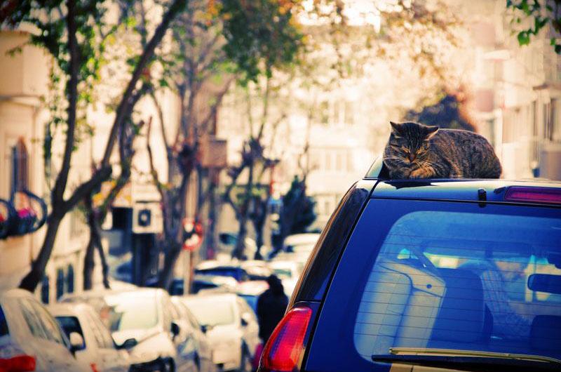 Кошки в Стамбуле.
