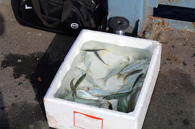 Балык как приготавливать, что такое балык,как приготавливать блюдо из мяса рыбы и птицы